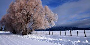snow winter wish